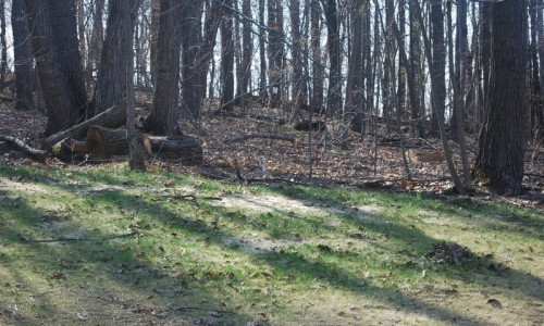 JMB HOMES 3 Kroms Drive in Kroms Keep woods